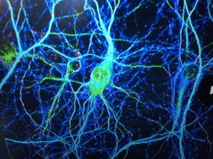 Verbindingen in hersenen